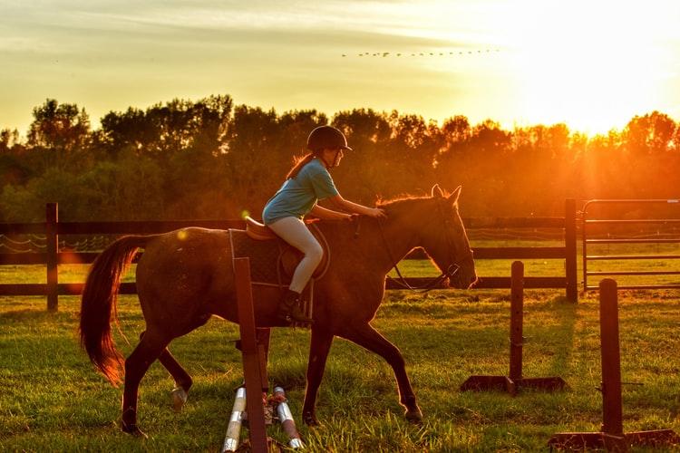 Darragh Equestrian